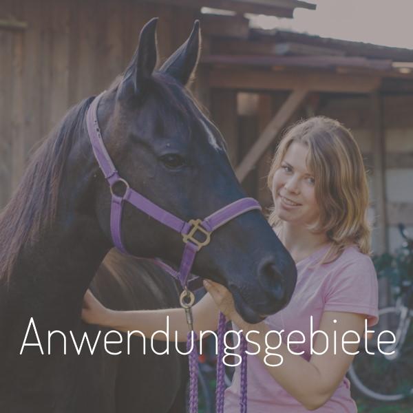 Pferdephysiotherapie Stuttgart